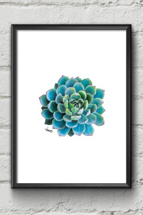 Succulent Art Print, Handmade, Hand drawn, Coloured Pencil Drawing, Cactus Art, Botanical, Gifts for him, Gifts for her, Made in Australia